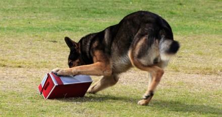 Son chien ouvre le colis destiné aux voisins, ce qu'il découvre dedans est très gênant