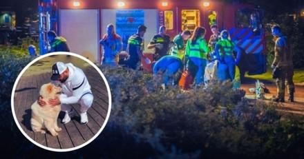 Le maître est tué alors qu'il promène son chien : le Chow-Chow a une réaction qui bouleverse les pompiers