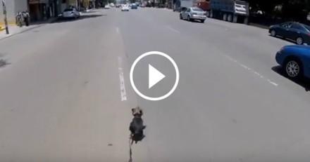 Incroyable ! Elle risque sa vie et se lance dans une course poursuite pour sauver un chien