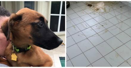 Il entre dans sa cuisine et a une vision d'horreur : tout est de sa faute !