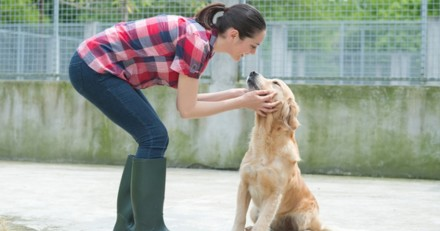 En Belgique, la contribution financière des animaleries au bien-être animal va augmenter