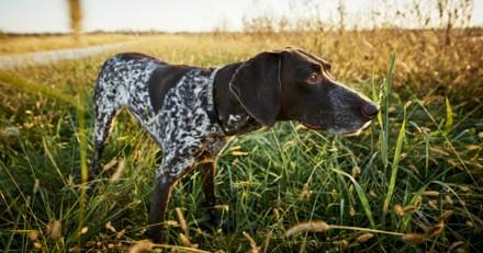 Le chasseur tue son chien et donne une explication révoltante