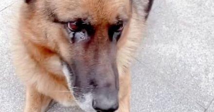 Deux ans après sa retraite, l'ancien chien de police revoit son maître-chien : sa réaction fend les cœurs !