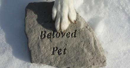 Mon chien / chat est mort : comment faire pour récupérer ses cendres ?