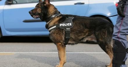 Un chien détecteur de billets met la patte sur plus d'un million d'euros !