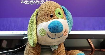 Un toiletteur retrouve le chien en peluche d'un petit garçon : avant de le rendre, il lui offre le toilettage de sa vie !