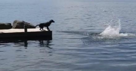 L'idée de ce chien pour sauver un homme en train de se noyer est incroyable !