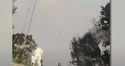 Un chien est en train de se noyer, mais une « sirène » monte à la surface pour l'aider (Vidéo)