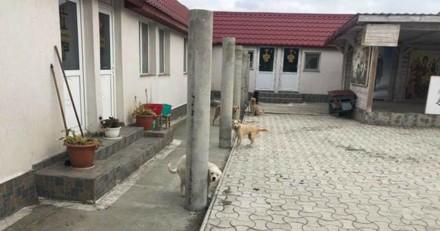 Ils trouvent 18 chiens attachés devant une église, ce que dit le prêtre choque tout le monde