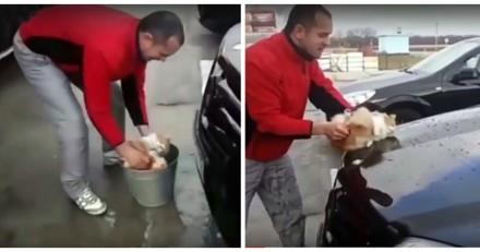 Il utilise son chat pour nettoyer sa voiture et donne une excuse inadmissible (Vidéo)