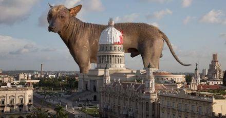 Cet artiste sensibilise sur l'errance animale à Cuba avec un projet décalé