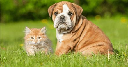 Vacances d'été : 9 dangers qui menacent vos animaux pendant la période estivale