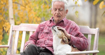 Vicanis propose une assurance pour la garde définitive des chiens en cas de décès ou de dépendance du propriétaire
