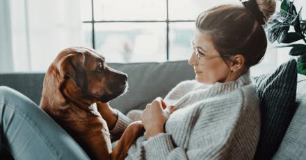 70 % des propriétaires seraient prêts à se mettre en danger pour leur animal