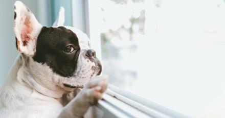 Son chien a la truffe collée à la fenêtre, quand elle voit ce qu'il y a dehors elle explose de rire