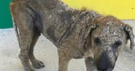 Personne ne voulait s'arrêter pour aider ce chien galeux et puis tout a changé