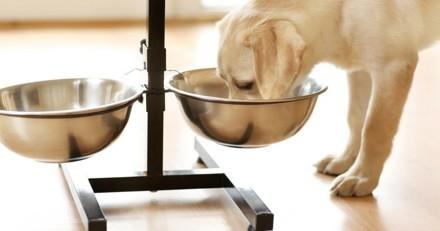 Mon chien est glouton ! Comment l'empêcher de manger trop vite ?