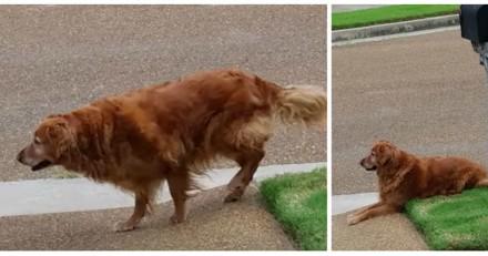 Chaque jour, son chien s'assoit au même endroit sans bouger, quand il comprend il n'en revient pas
