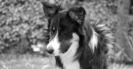 Ce chien se fait enlever par erreur avant d'être retrouvé à 300 km de chez lui !