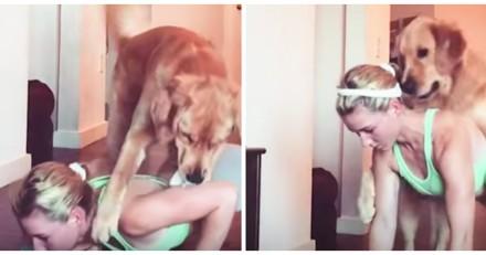 Ce chien a décidé de tout faire pour empêcher sa maîtresse de faire sa gym (Vidéo du jour)