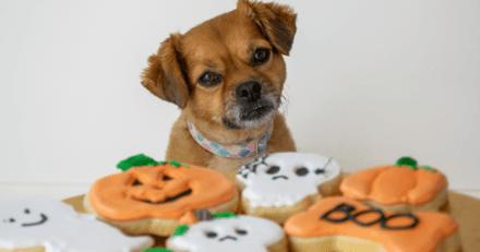 6 friandises effrayantes et gourmandes à offrir à son chien pour Halloween