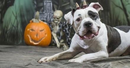 4 idées pour fêter Halloween avec votre chien !
