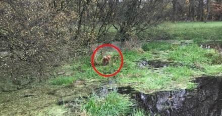 Ce chien se lance à la poursuite d'un écureuil, mais va vite le regretter…