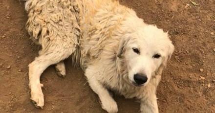 Durant un incendie, son chien refuse de bouger. Il comprend pourquoi et a les larmes aux yeux