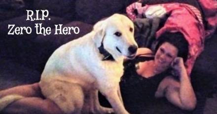 En pleine fête d'anniversaire, un chien meurt dans une fusillade en protégeant sa famille