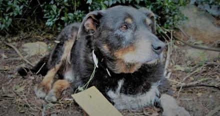 Leur chien disparait et revient avec un petit mot émouvant accroché à son collier