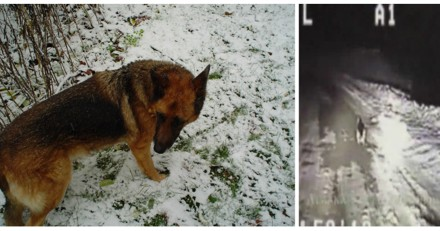 Les policiers croisent un chien au milieu de la nuit, le suivent et comprennent qu'il y a urgence (Vidéo)