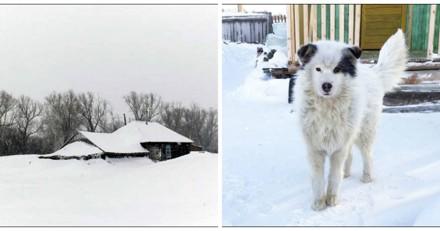 Il se précipite pour aider un chien abandonné dans la neige et est choqué de découvrir ce qu'il cache