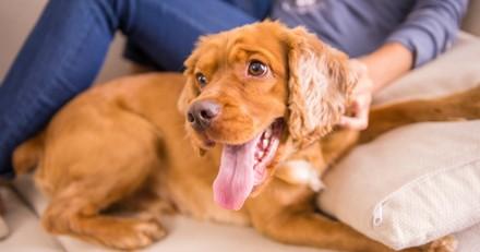 Prenez un selfie avec votre animal et participez à la lutte contre les abandons avec APRR et la SPA !