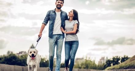 Découvrez quelle est la meilleure ville où vivre avec son chien en 2019 !
