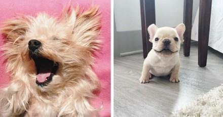 Les 10 chiens les plus heureux du Web