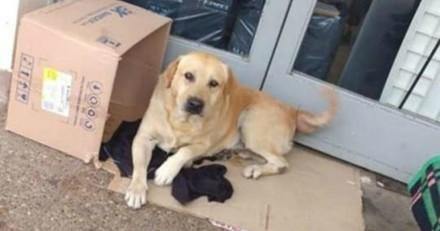 Mourant, il demande à voir son chien à l'hôpital. La réaction du toutou fait pleurer tout le monde