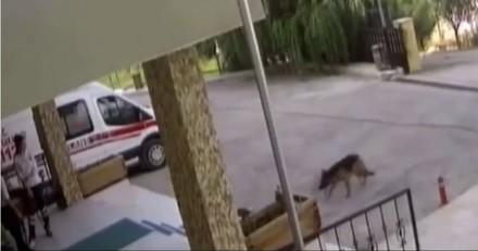 Ils voient un chien arriver aux urgences et n'en croient pas leurs yeux quand ils comprennent pourquoi