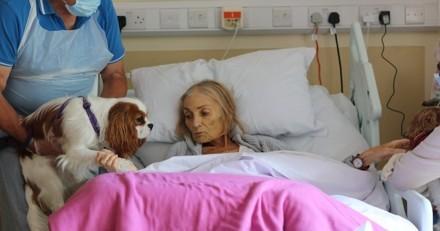 En phase terminale d'un cancer, une femme reçoit la visite de ses animaux à l'hôpital