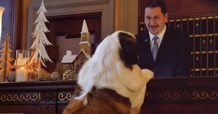 Pour Noël, cet hôtel de luxe bichonne aussi les chiens ! (Vidéo)