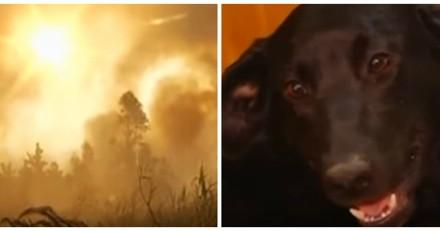Pendant un incendie, les habitants voient une chienne enterrer ses petits. La suite est bouleversante