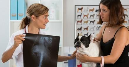 SOS PETS : une application en cas d'urgence médicale de votre animal