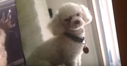 Ils se disputent un chien, la juge prend une décision qui va vous plaire (Vidéo)