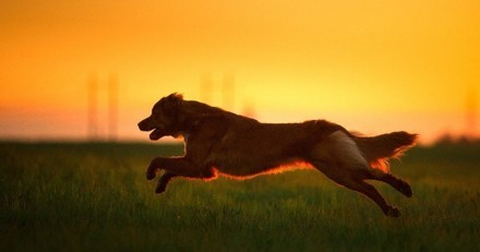 Ce chien se sacrifie pour neutraliser un kamikaze et évite un massacre