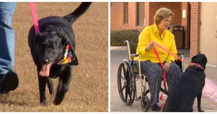 Elle tombe et se fracture le bassin, ce que fait son chien la terrifie  puis elle comprend son erreur (Vidéo)
