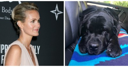 Laeticia Hallyday : le chien de Johnny va mal