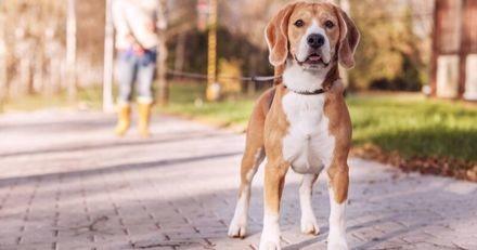 Comment les colliers d'éducation participent à l'épanouissement de votre chien ?