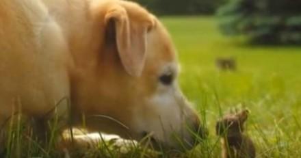 Ce chien a décidé de devenir ami avec un lapin, et c'est trop mignon (Vidéo du jour)