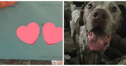 2 ans après leur séparation, elle reçoit une lettre de son ex pour son chien, jamais elle n'aurait imaginé la suite