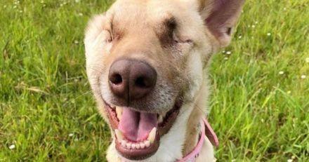 Cette chienne gestante a reçu 17 coups de fusil avant de devenir chien de service