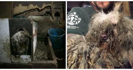 Ce chien a été abandonné au pire endroit possible, jamais son propriétaire n'aurait imaginé la suite
